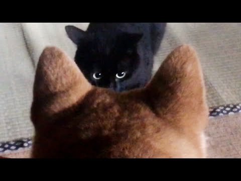 朝が弱い犬と朝だけ元気な猫。 Dog and Cat in the rainy morning - YouTube