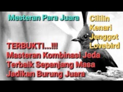 Download Lagu Masteran burung kicau terbukti juara suara lengkap cililin kenari jenggot lovebird