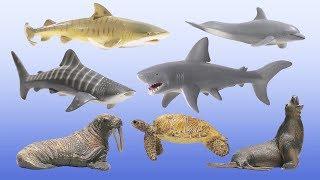 Vidsville Aquarium - Aquatic Animals Shark Whale Dolphin Fish Sea Lion Sea Turtle For Kids
