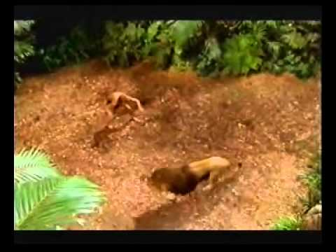 Tarzan (Baltimora - Tarzan Boy)