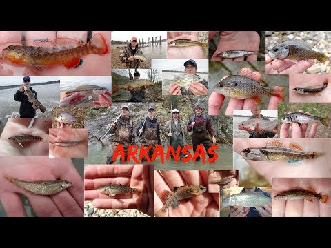 A Trip To Arkansas For Species Diversity (Fishing/ Micro Fishing)