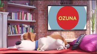 Play It's Gonna Be A Lovely Day (The Secret Life of Pets 2) (Latin Mix)