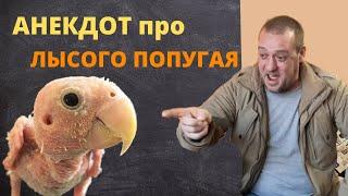Анекдот про Лысого Попугая Прикольные анекдоты 2021 от Пошлого