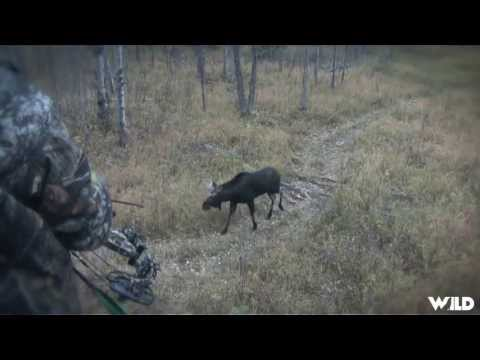 Hunting Moose With Bow In Alberta Part 2