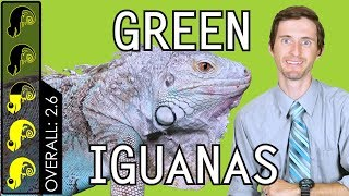 Green Iguana, The Best Pet Lizard