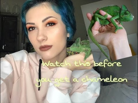 KNOW THIS BEFORE GETTING A CHAMELEON
