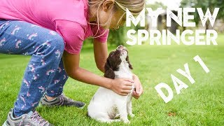 My CUTE new PUPPY comes home | Springer Spaniel