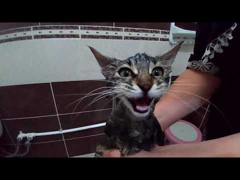 Baby and Cat Fun and Fails - Funny Baby Video cats