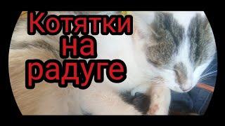 ‼️Кошка родила‼️Мертвые котята‼️