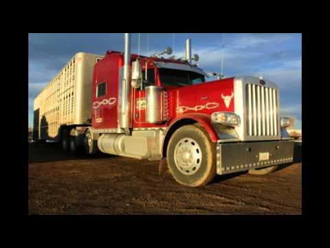BHLL. Colorado bull wagons