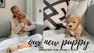 WE GOT A PUPPY | BRINGING HOME OUR TOY MALTIPOO