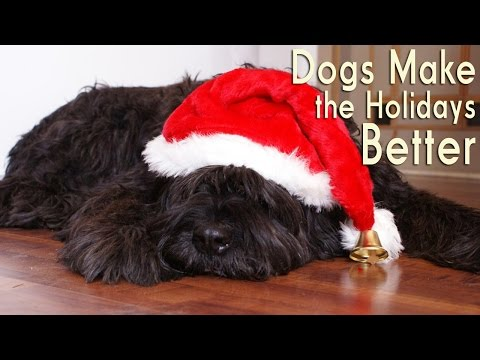 Why Dogs Make Great Holiday Companions