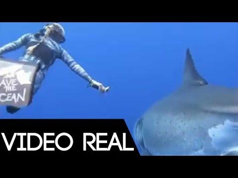 Buceando con un enorme Tiburòn blanco