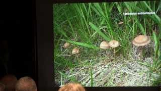 Paul Kroeger - The History of Psilocybin Containing Magic Mushrooms