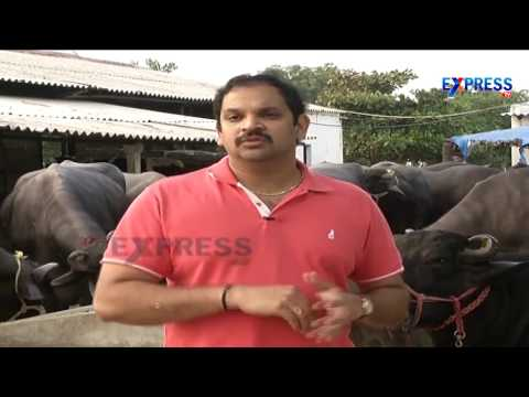 Organics Dairy  Express TV