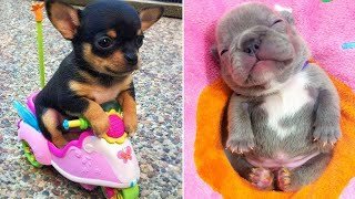 Baby Dogs 🔴 Cute and Funny Dog Videos Compilation #2 | 30 Minutes of Funny Puppy Videos 2021