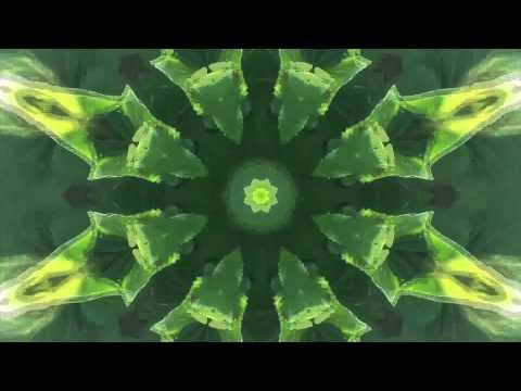 Waterflower  - Tomorrow