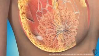zsírvesztő sejtek súlycsökkenés a nyombélváltás után