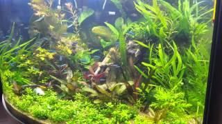 Угловой аквариум, травник(Моему аквариуму уже 3 мес. Все делал сам. 350 л. Светодиодный свет. Контроллер Подача СО2, подача микро и макро..., 2016-03-28T18:55:32.000Z)