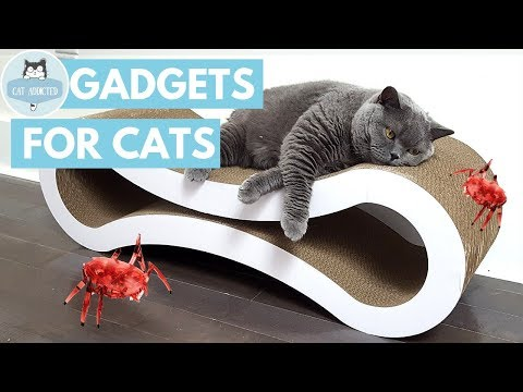 12 Amazing Gadgets For Cats