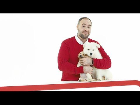 Вопрос: Стоит ли заводить собаку, если живешь в квартире?