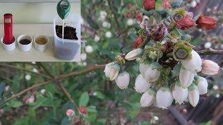 Coffee grounds to lower soil pH for Blueberries, Fact or fiction..