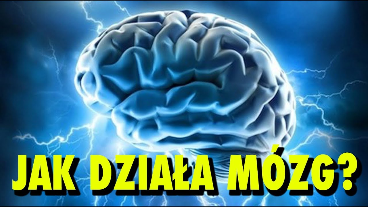 Jak działa Twój mózg?