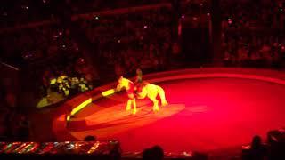 Мисс София рассказывает про Шоу индийских слонов! Варшавский цирк в г.Перми. 15.10.17г.