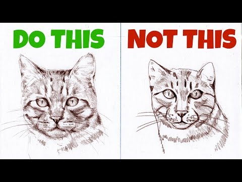How to draw a cat face realistic