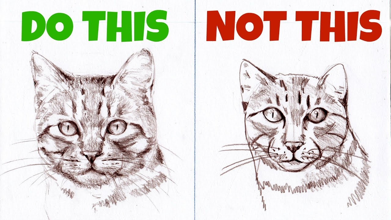 Sketching animals how to draw a realistic cat