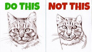 Sketching Animals: How to Draw a Realistic Cat