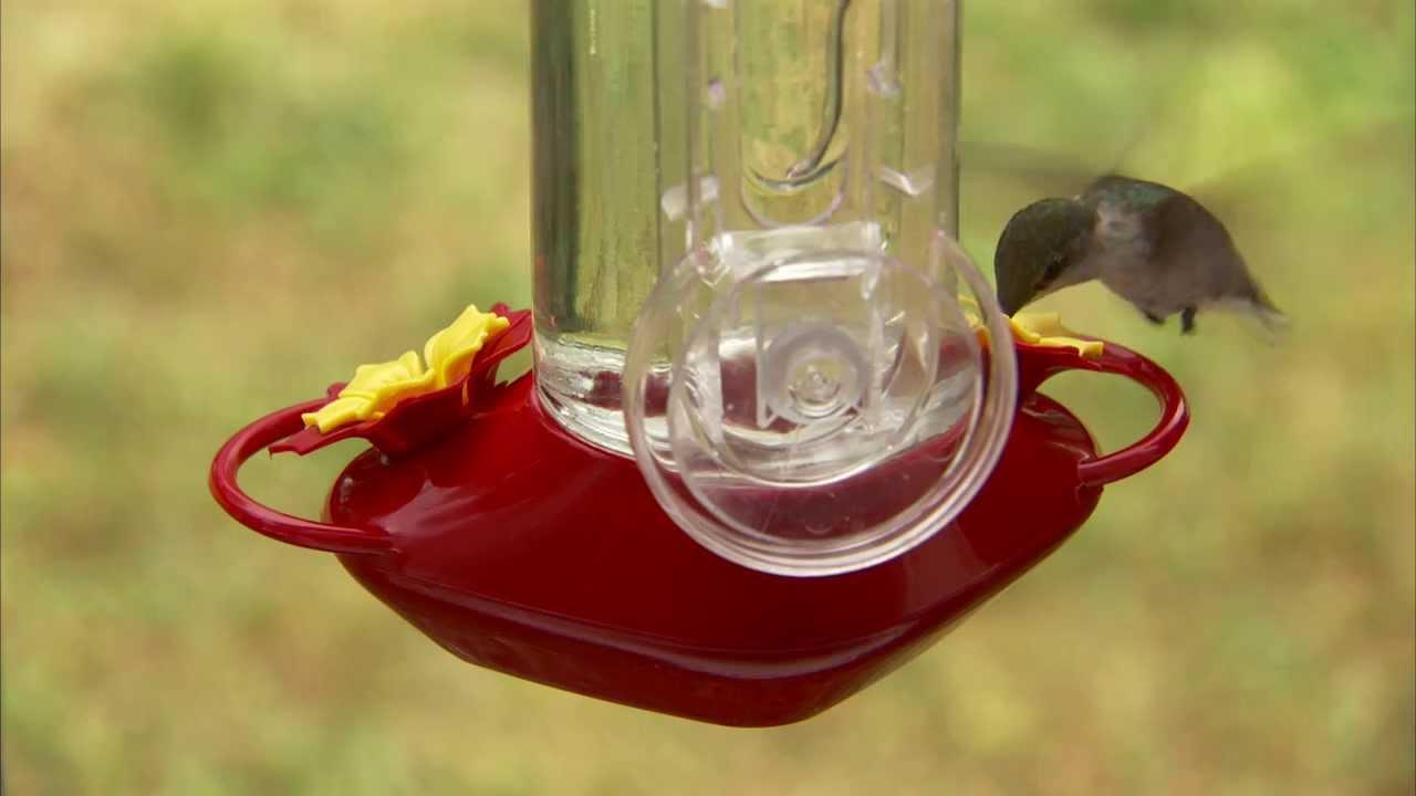 meet your garden song hummingbird