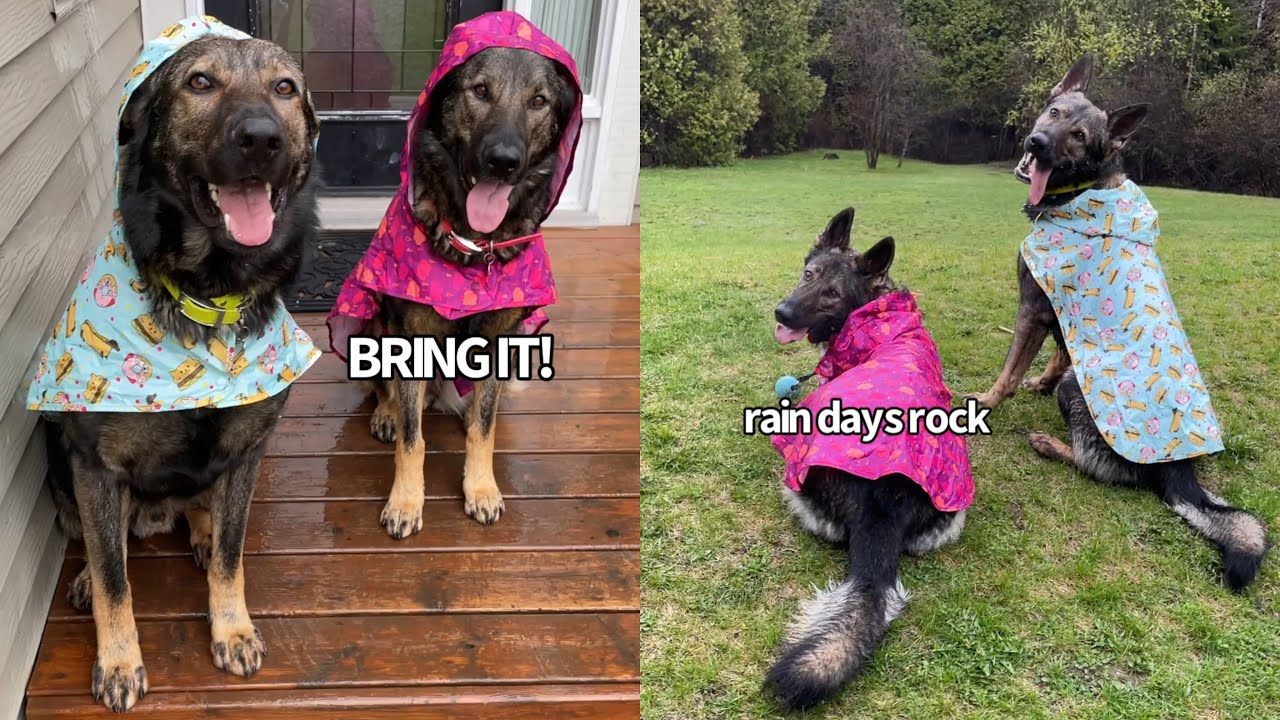 My Dogs Have A Rain Day