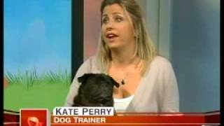 Nyc Dog Trainer Kate Perry  Today Show