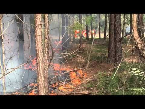 Prescribed burn South Georgia