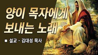 [예배설교] 양이 목자에게 보내는 노래 (김대성 목사)