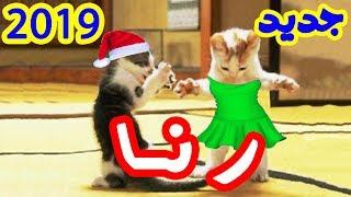 قطة ترقص على أغنية رنا أخت ندى حبيبة بابا جديد 2019 Rana HD