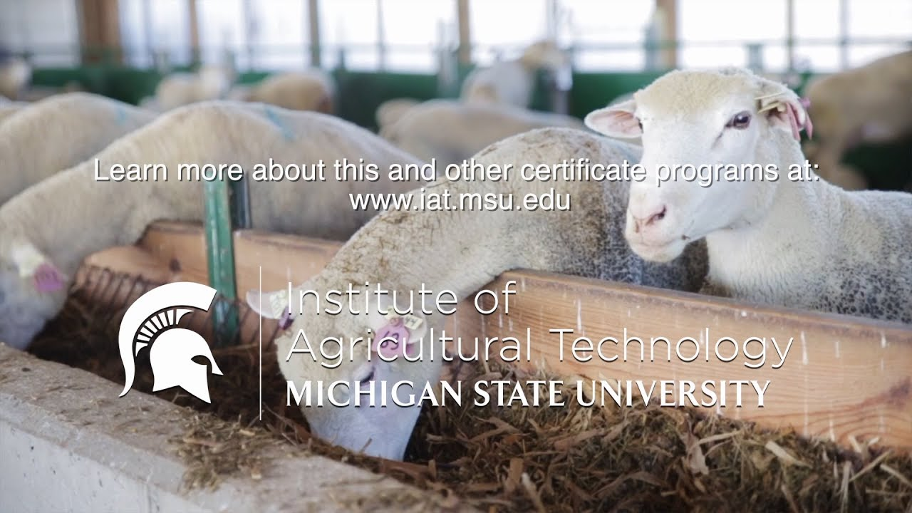 Livestock & Poultry Programs - Department of Animal Science