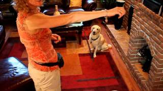 """How To Train Your Dog To """"look"""" At You And Not Other Distractions"""