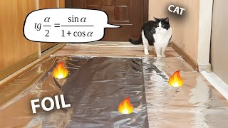 Do Cats Walk On Foil? An Experiment.