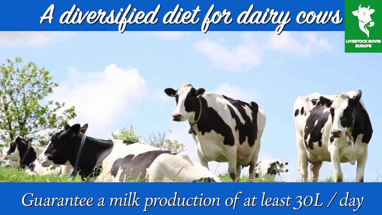 Dairy farming (profitable and efficient):