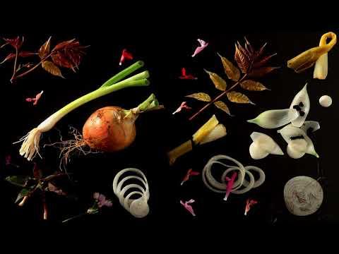 Les 20 ans de Plume de carotte