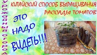 КИТАЙСКИЙ СПОСОБ ВЫРАЩИВАНИЯ  РАССАДЫ ТОМАТОВ!!!ЭТО НАДО ВИДЕТЬ!!!(В этом видео я расскажу очень необычный способ выращивания рассады томатов !Рекомендую посмотреть! ______..., 2016-03-07T07:42:53.000Z)