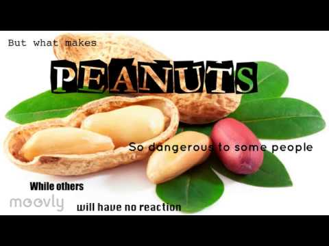 Peanuts genetically modified to contained reduced allergens