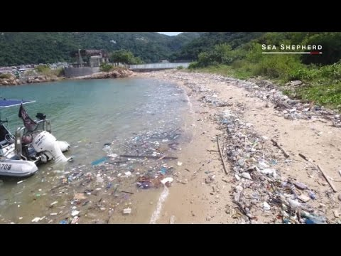Hong Kong's oceans are being trashed by plastic