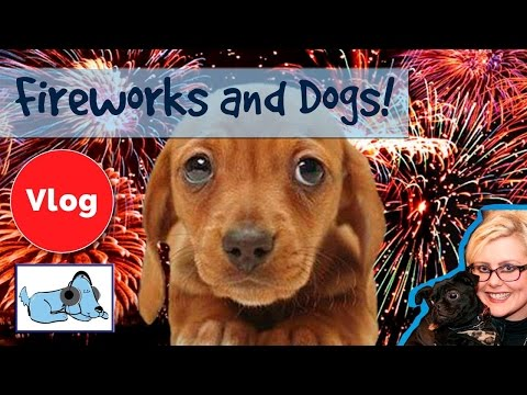 How to Help Scared Dogs Cope with Fireworks! Calm Down Your