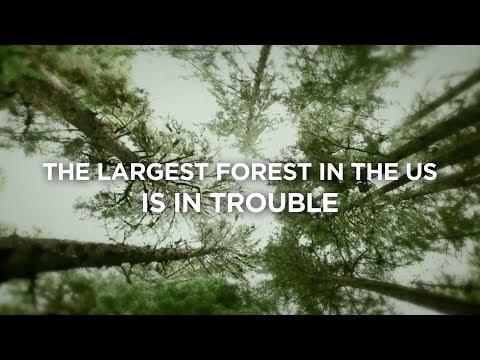 The Musicwood Documentary Trailer
