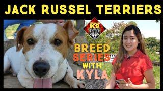 JACK RUSSEL TERRIERS  MANALO K9 BREED SERIES with KYLA