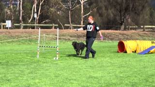 Brittany & Flossy Excellent Agility-am 17 March 2013