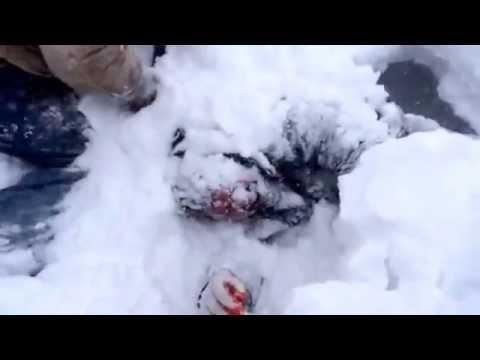 Trailer do filme Resgate na Neve